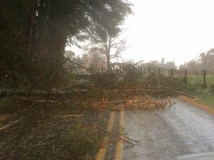 Tree debris blocking the roadway.