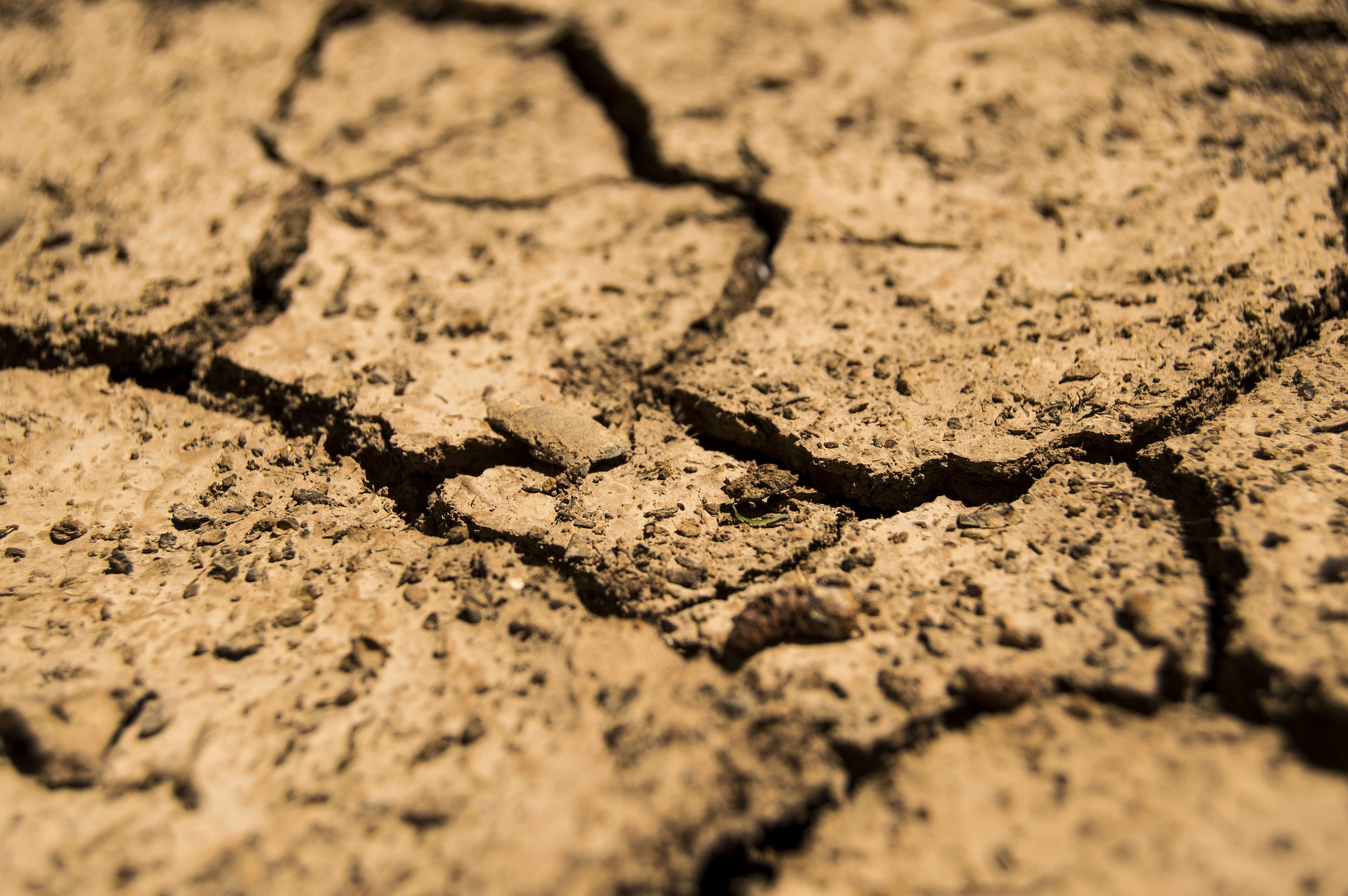 Dry cracked earth in heat stricken areas of drought