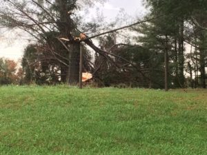 A tree snapped in two from wind speed.